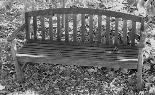 Catch up on Garden Group news at The Garden Bench in the Bryn Mawr Bugle